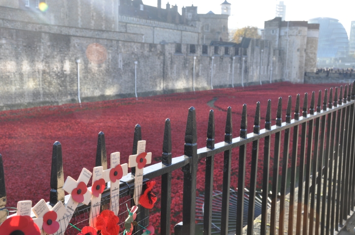Tower_Poppies_7_November_7