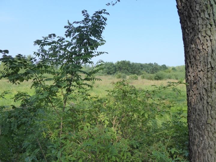 Rakow view to graveyard
