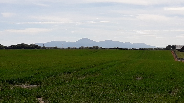 Mountains of Mourne from near Ballee